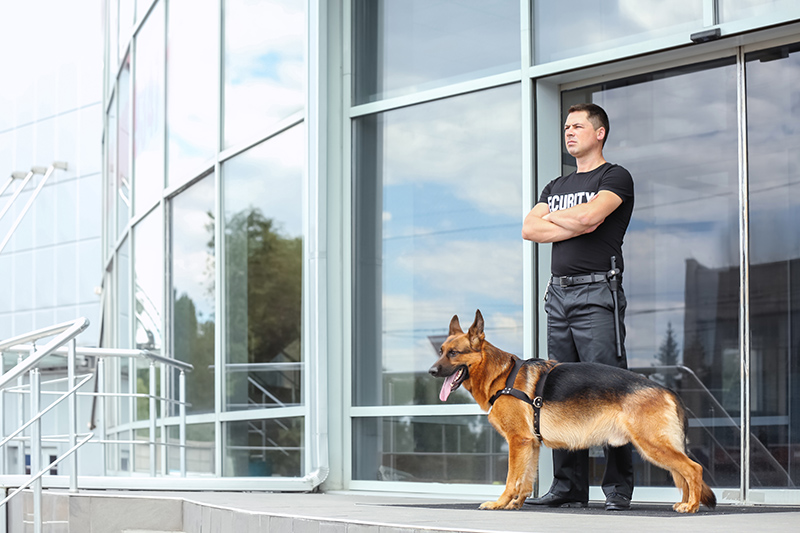 Security Guard Cv in London Greater London